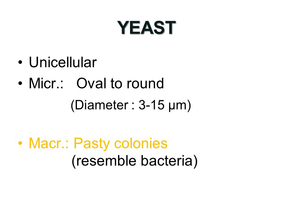 YEAST Unicellular Micr.:Oval to round (Diameter : 3-15 µm) Macr.: Pasty colonies (resemble bacteria)