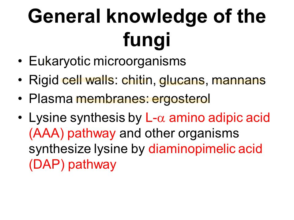General knowledge of the fungi Eukaryotic microorganisms Rigid cell walls: chitin, glucans, mannans Plasma membranes: ergosterol Lysine synthesis by L
