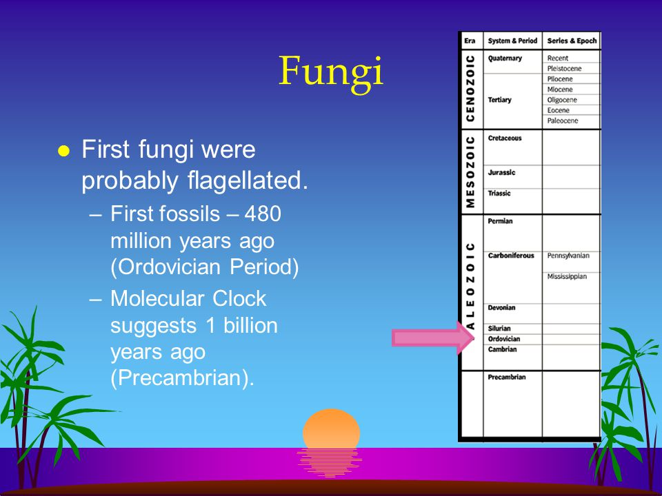 l First fungi were probably flagellated.