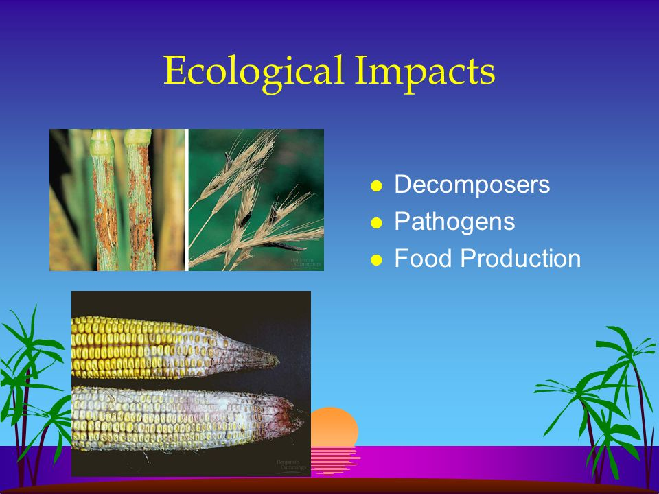 Ecological Impacts l Decomposers l Pathogens l Food Production