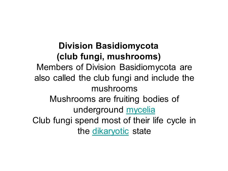 Division Basidiomycota (club fungi, mushrooms) Members of Division Basidiomycota are also called the club fungi and include the mushrooms Mushrooms ar
