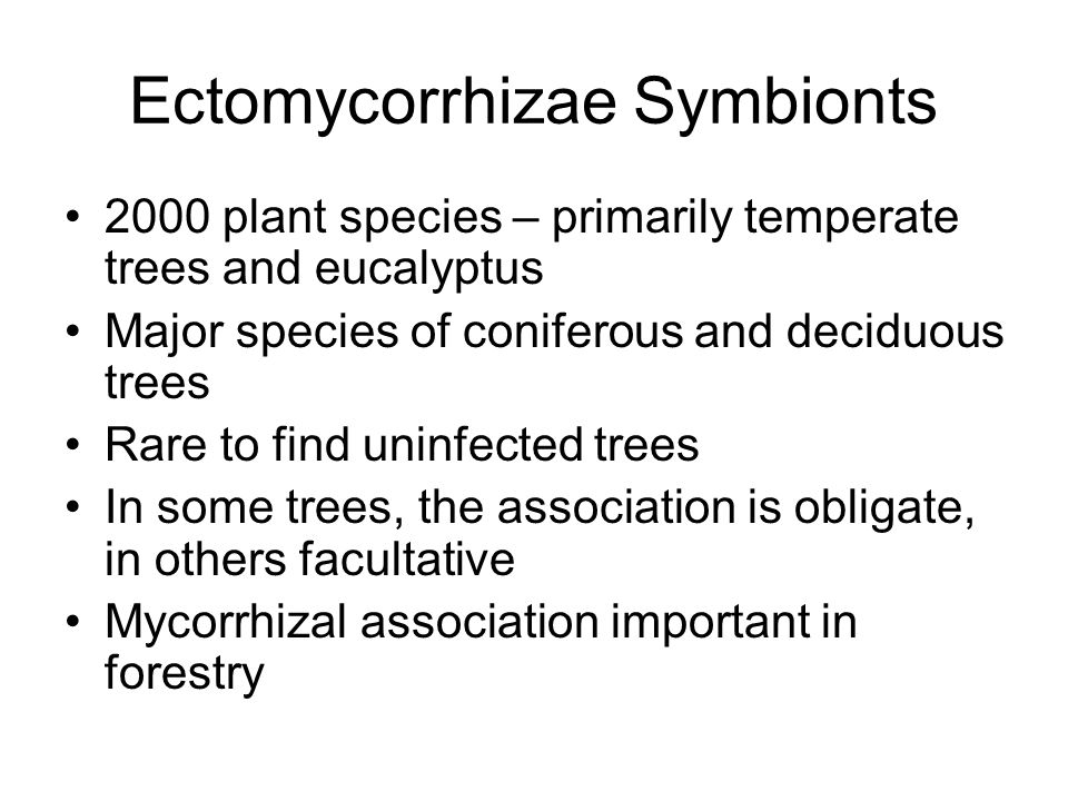 Ectomycorrhizae Symbionts Basidiomycetes – Agaricales (many mushroom species), Lycoperdales, Sclerodermatales, few Aphyllophorales –Pisolithus tinctorus – used to form commercial inoculum for nursery trees, common in southern pine Ascomycota – Pezizales – cup fungi and truffles Over 5000 species of fungi have been shown to form ectomycorrhizae