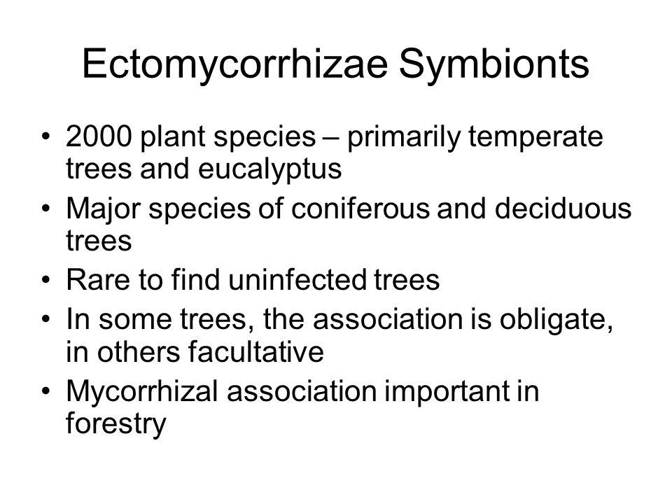 Arbutoid mycorrhizae Plant are also Ericaceae – Arbutus, Arctostaphylose, Pyrola Fungi are basidiomycetes that also form ectomycorrhizae Fungi form sheath and Hartig net, hyphae also penetrate outer coritcal cells