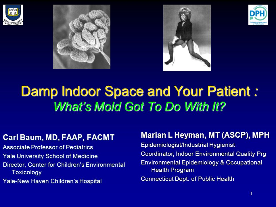 11 Damp Indoor Space and Your Patient : What's Mold Got To Do With It.