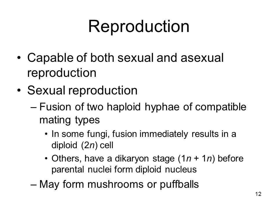 Reproduction Capable of both sexual and asexual reproduction Sexual reproduction –Fusion of two haploid hyphae of compatible mating types In some fung