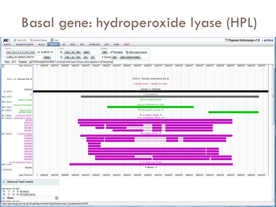 Basal gene: hydroperoxide lyase (HPL)