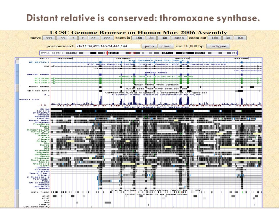 Distant relative is conserved: thromoxane synthase.