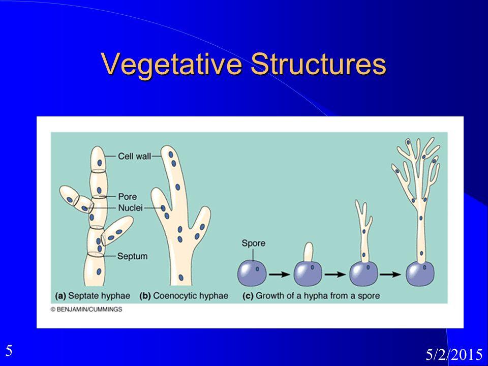 5 5/2/2015 Vegetative Structures