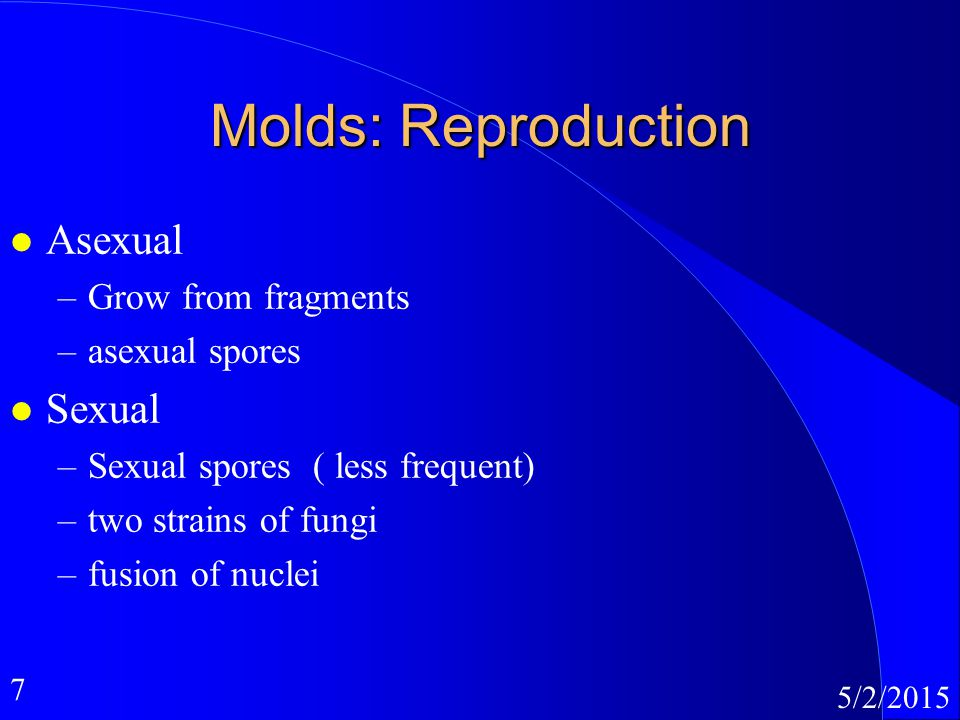 7 5/2/2015 Molds: Reproduction l Asexual –Grow from fragments –asexual spores l Sexual –Sexual spores ( less frequent) –two strains of fungi –fusion o