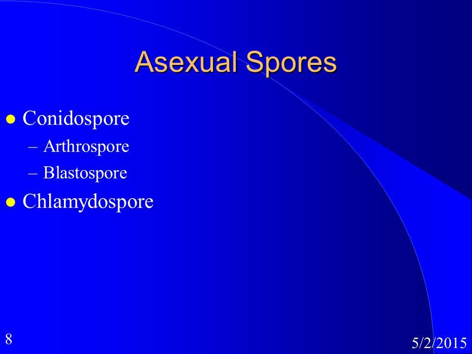 8 5/2/2015 Asexual Spores l Conidospore –Arthrospore –Blastospore l Chlamydospore