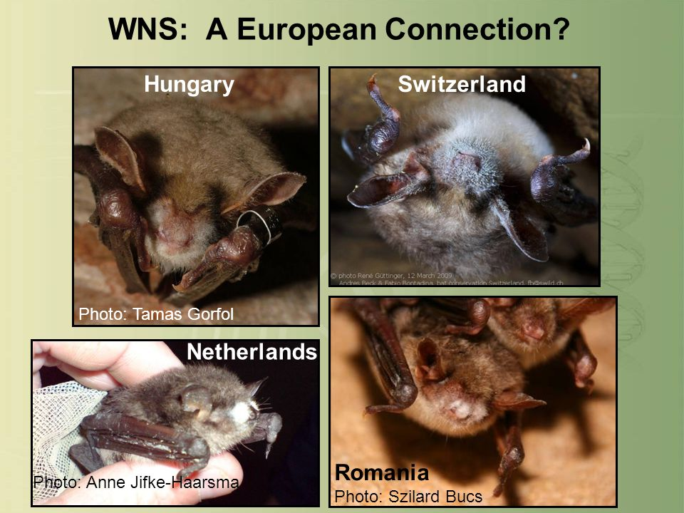 WNS: A European Connection.