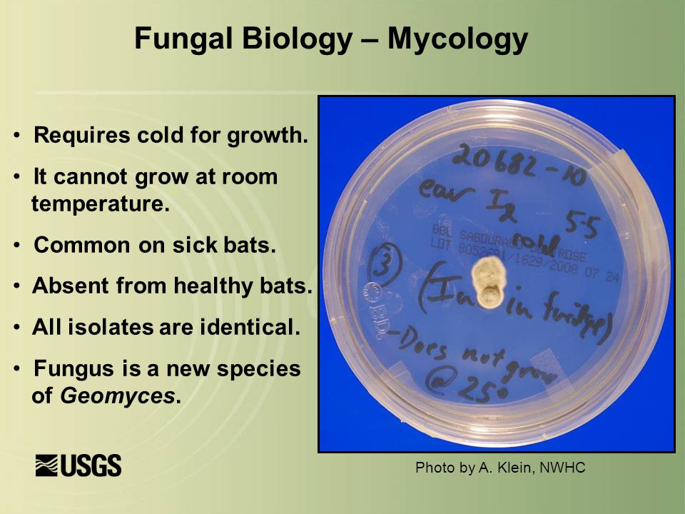 Fungal Biology – Mycology Requires cold for growth.