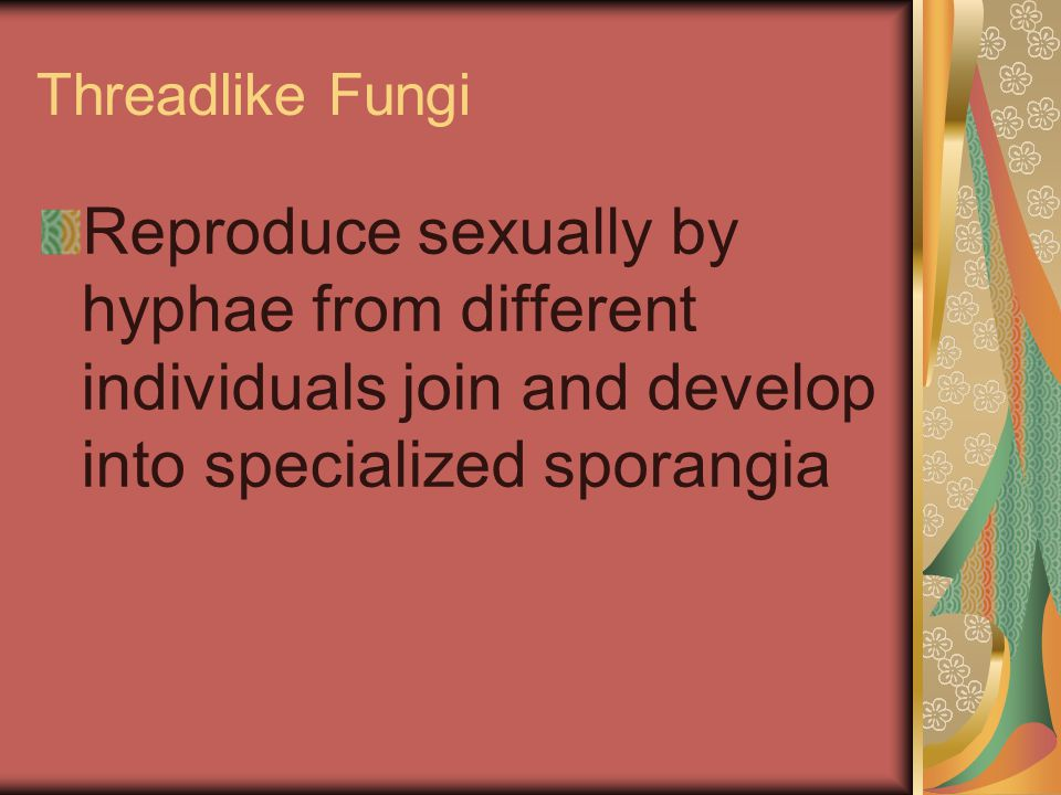 Threadlike Fungi Reproduce sexually by hyphae from different individuals join and develop into specialized sporangia