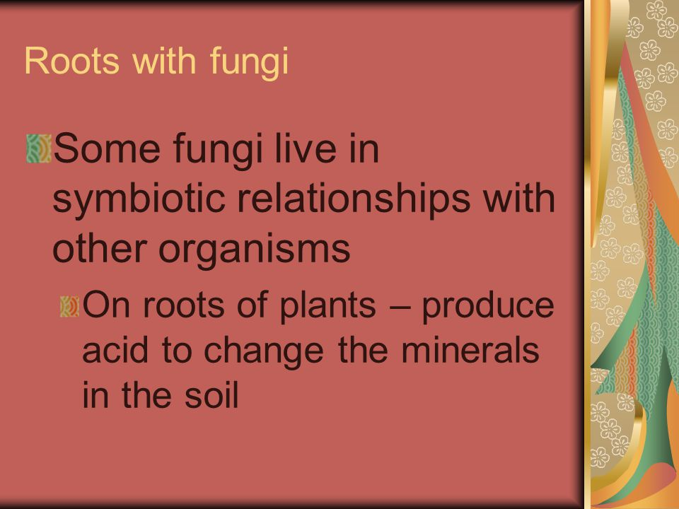 Roots with fungi Some fungi live in symbiotic relationships with other organisms On roots of plants – produce acid to change the minerals in the soil