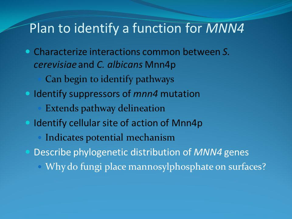 Plan to identify a function for MNN4 Characterize interactions common between S. cerevisiae and C. albicans Mnn4p Can begin to identify pathways Ident