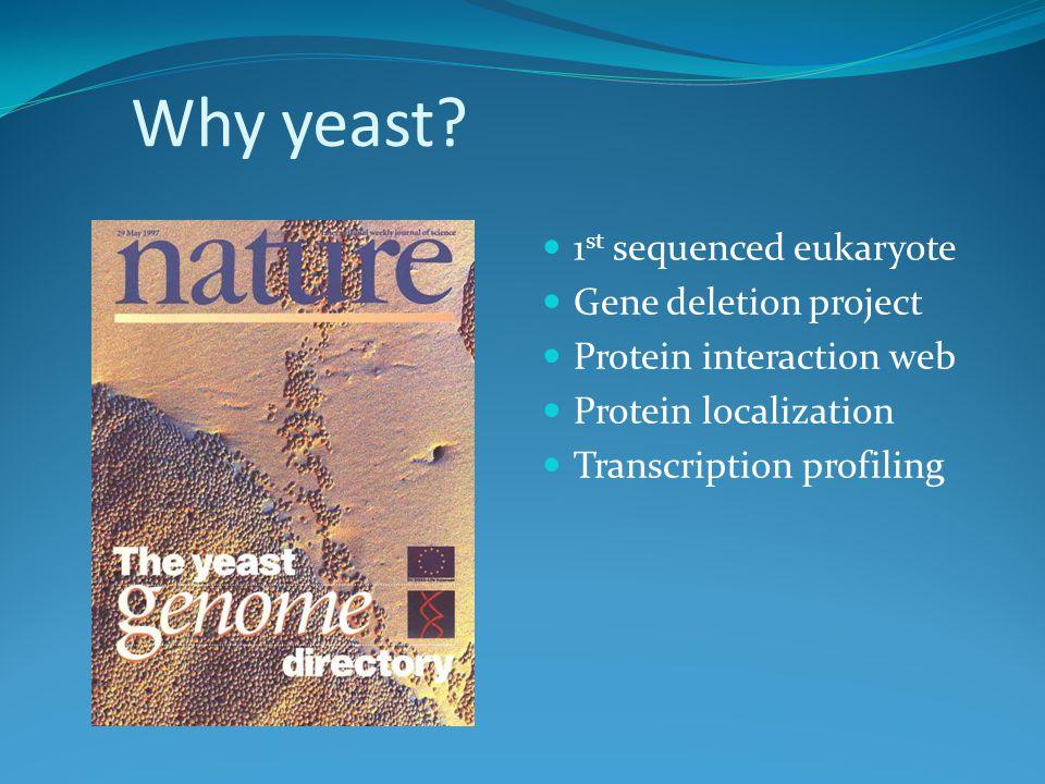 Why yeast.