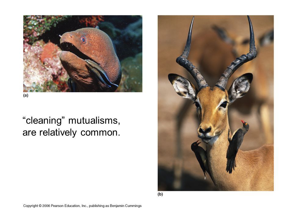 cleaning mutualisms, are relatively common.