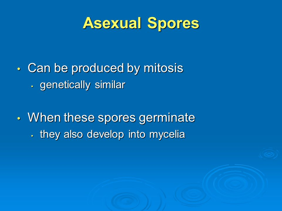 Asexual Spores Can be produced by mitosis Can be produced by mitosis genetically similar genetically similar When these spores germinate When these sp
