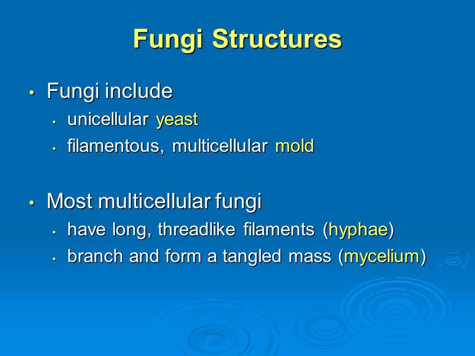 Fig. 26-2, p. 557 Spore Hypha Mycelium