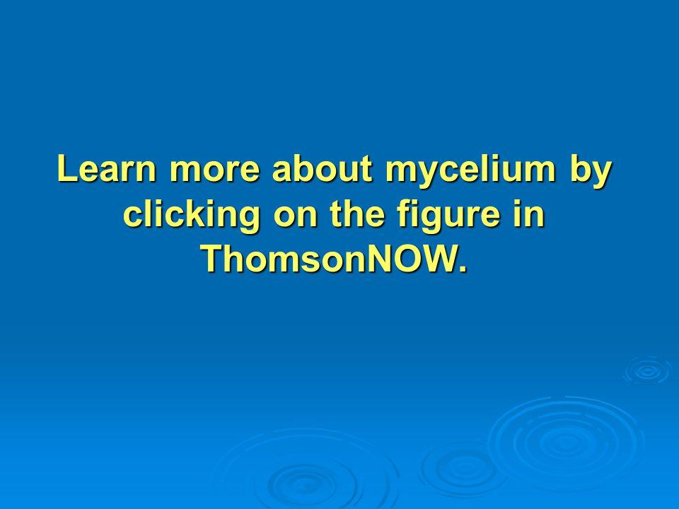 Arbuscular Mycorrhizae