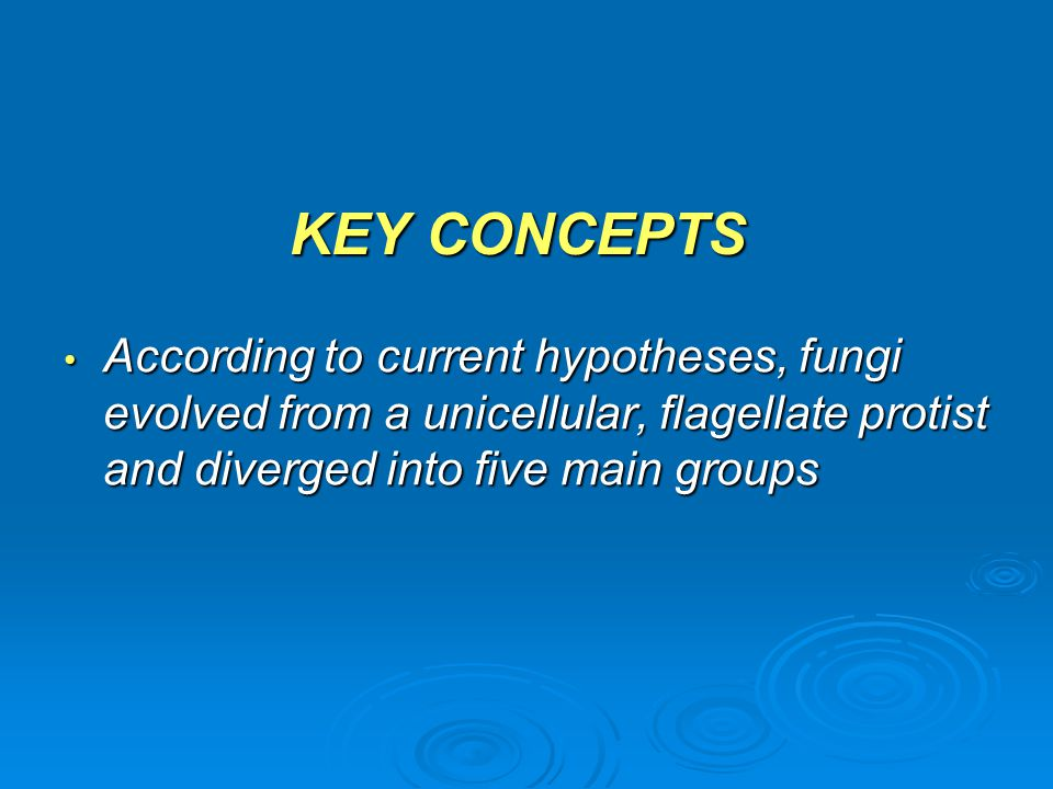 KEY CONCEPTS According to current hypotheses, fungi evolved from a unicellular, flagellate protist and diverged into five main groups According to cur