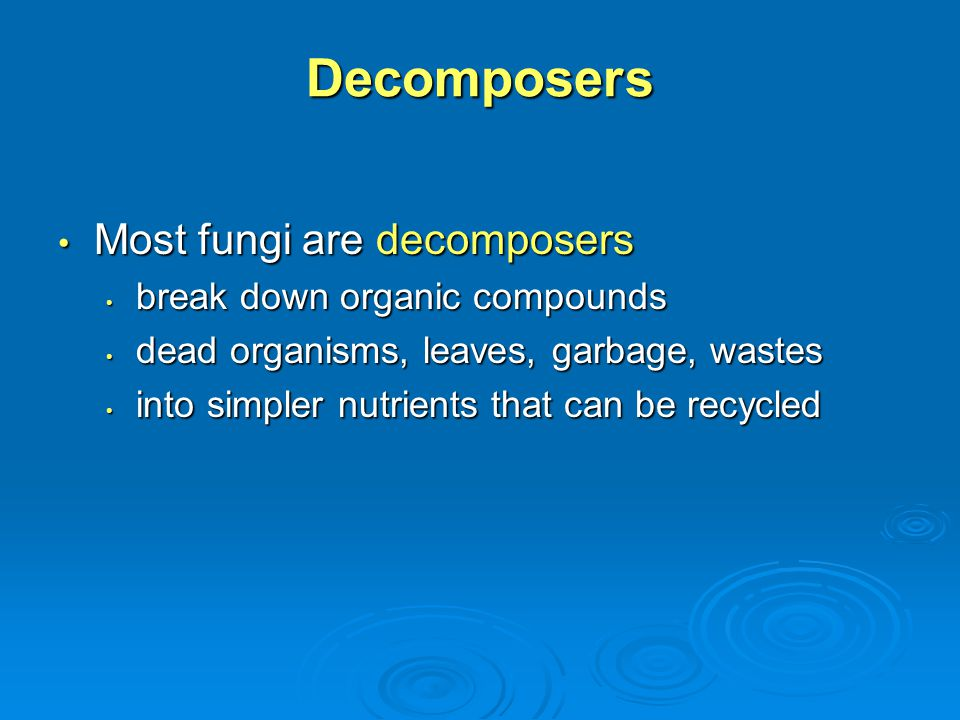 Decomposers Most fungi are decomposers Most fungi are decomposers break down organic compounds break down organic compounds dead organisms, leaves, ga