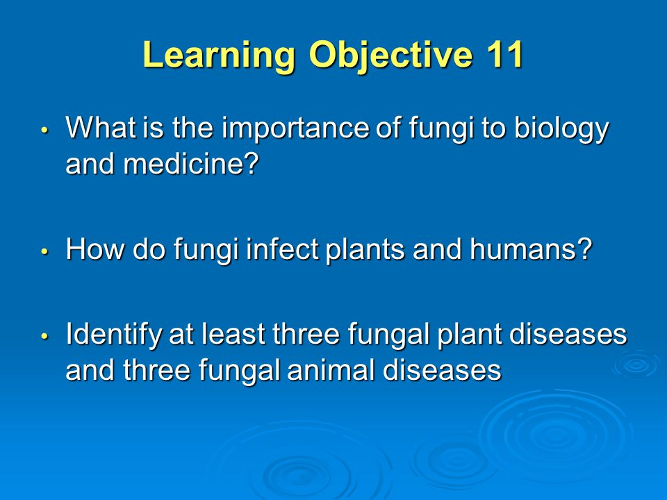 Learning Objective 11 What is the importance of fungi to biology and medicine? What is the importance of fungi to biology and medicine? How do fungi i