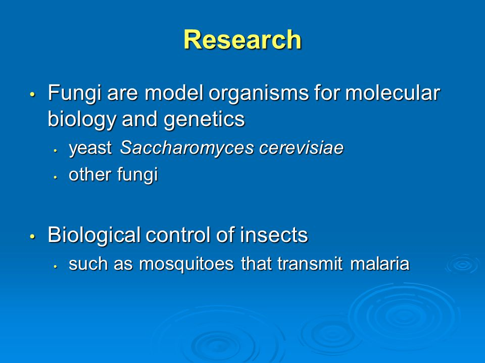 Research Fungi are model organisms for molecular biology and genetics Fungi are model organisms for molecular biology and genetics yeast Saccharomyces