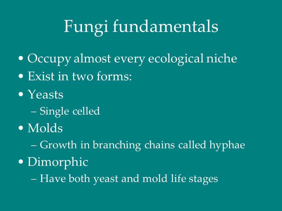 Fungi fundamentals Occupy almost every ecological niche Exist in two forms: Yeasts –Single celled Molds –Growth in branching chains called hyphae Dimo
