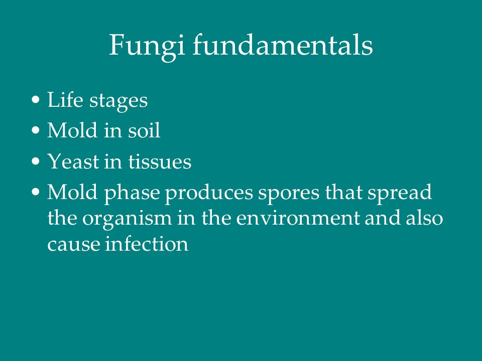 Fungi fundamentals Life stages Mold in soil Yeast in tissues Mold phase produces spores that spread the organism in the environment and also cause inf
