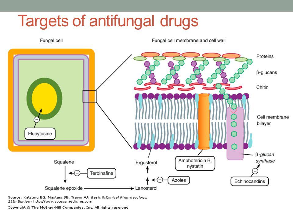 Targets of antifungal drugs