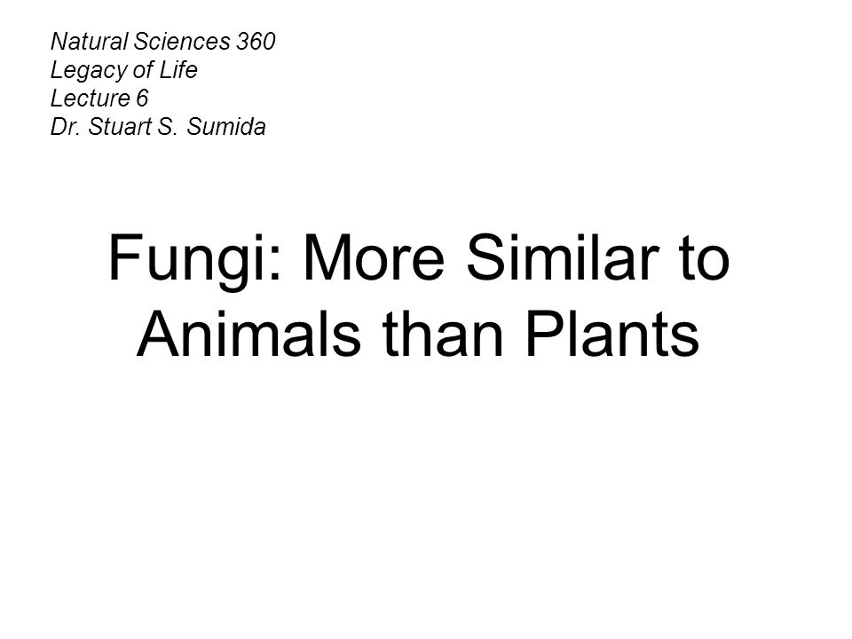 Natural Sciences 360 Legacy of Life Lecture 6 Dr. Stuart S. Sumida Fungi: More Similar to Animals than Plants