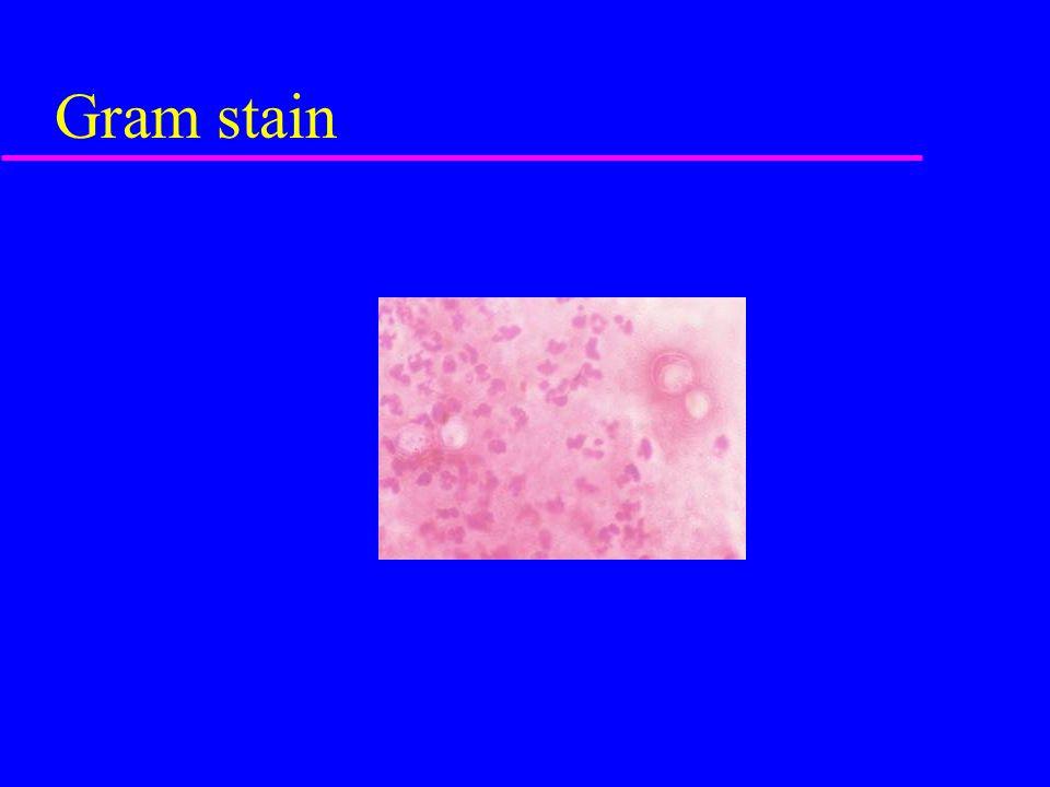 Gram stain