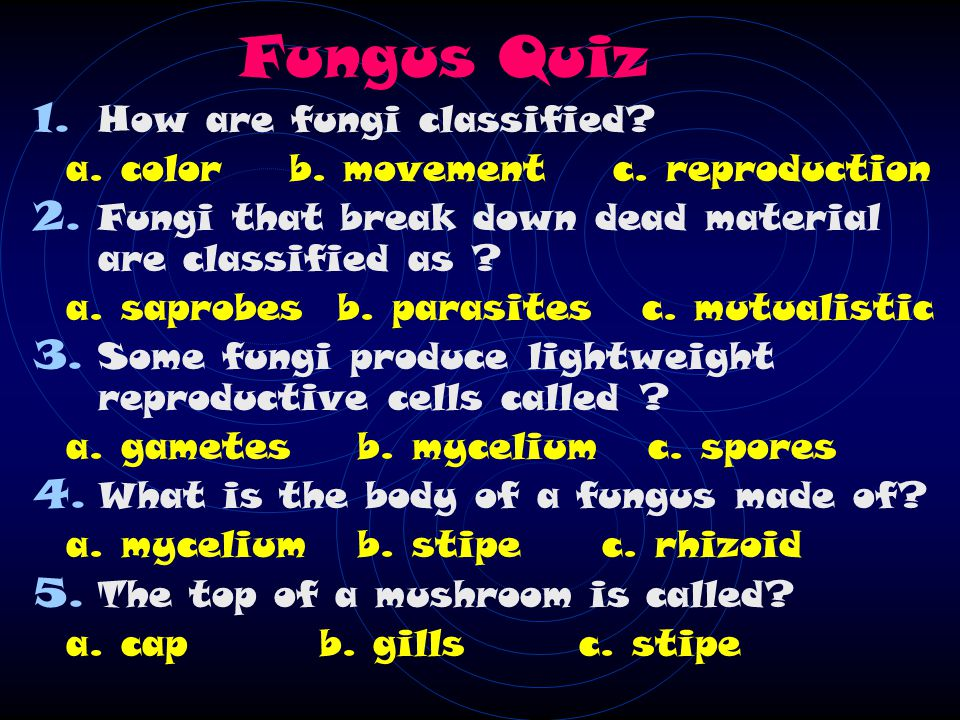 Fungus Quiz 1. How are fungi classified. a. color b.