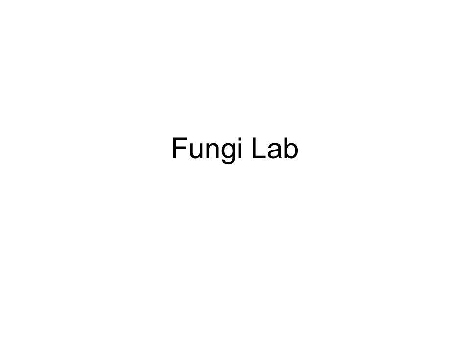 Fungi Lab