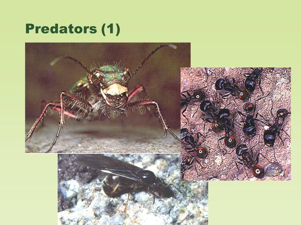Predators (1)