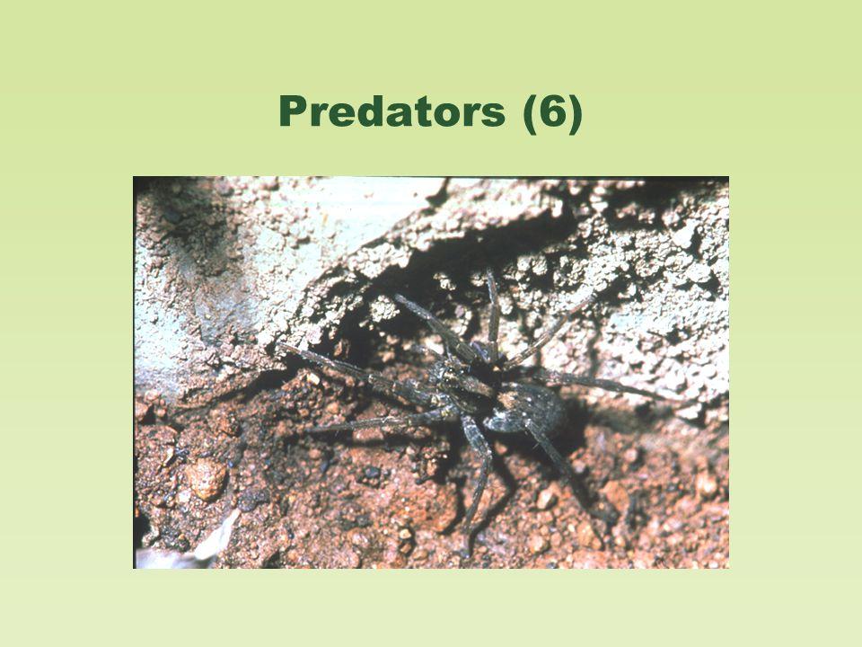 Predators (6)