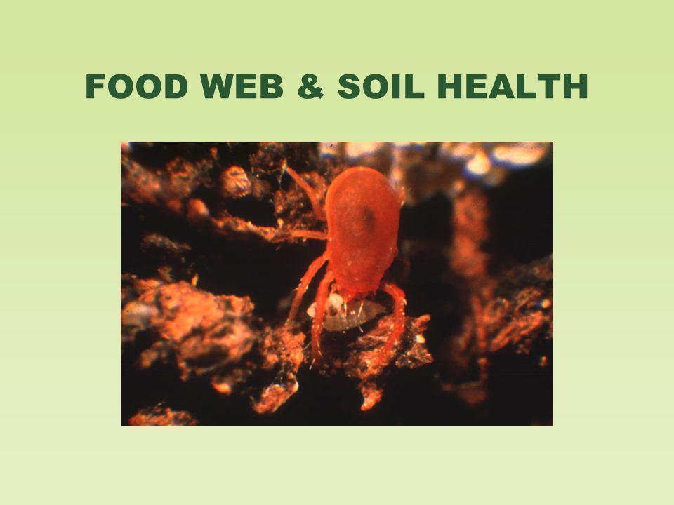 FOOD WEB & SOIL HEALTH
