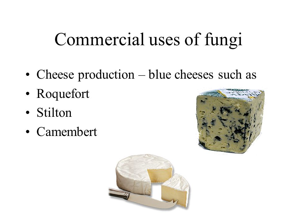 Commercial uses of fungi Cheese production – blue cheeses such as Roquefort Stilton Camembert