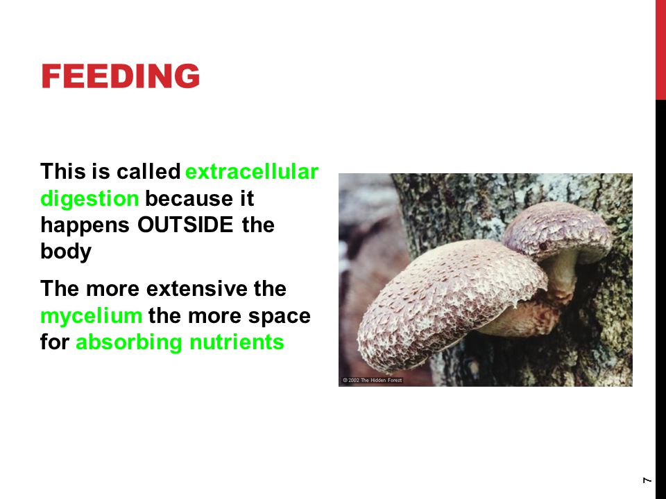 PARASITIC FUNGI Some fungi are parasites and can cause diseases such as athlete's foot and ringworm.