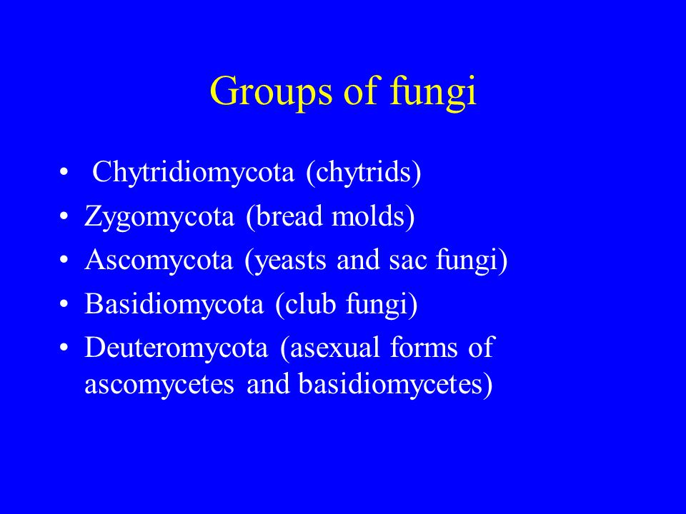 Generalised Life cycle of fungi Haploid mycelia of different mating types Fusion of hyphae* Dikaryotic mycelium gives fruiting body Nuclear fusion Diploid stage Meiosis to give spores Not in chytrids* Zygomycetes - V.