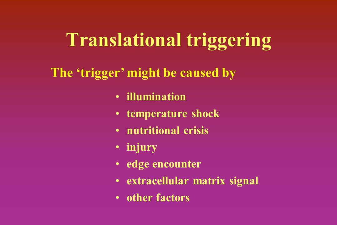 Translational triggering illumination temperature shock nutritional crisis injury edge encounter extracellular matrix signal other factors The 'trigge