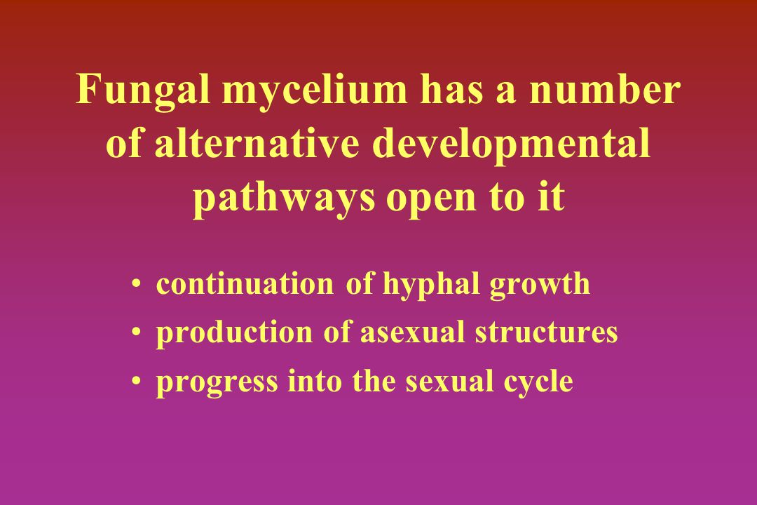 Fungal mycelium has a number of alternative developmental pathways open to it continuation of hyphal growth production of asexual structures progress into the sexual cycle