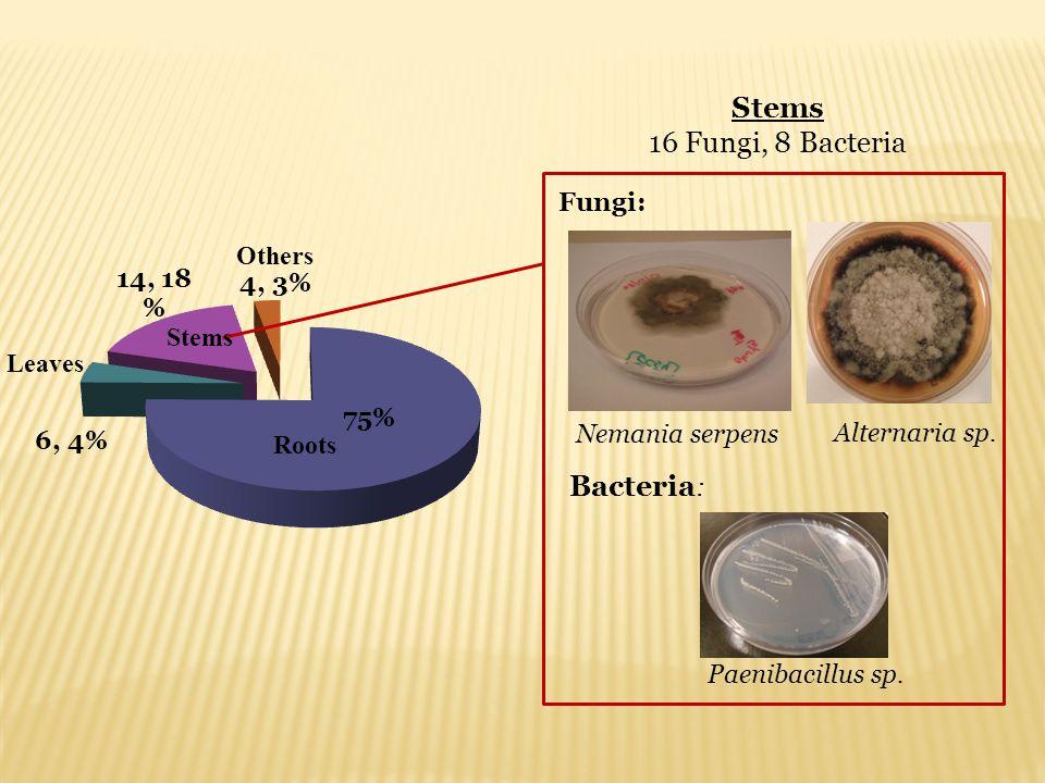 Stems 16 Fungi, 8 Bacteria Alternaria sp. Nemania serpens Fungi: Paenibacillus sp. Bacteria : Roots Stems Leaves Others