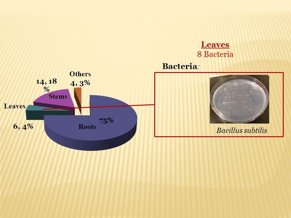 Leaves 8 Bacteria Bacillus subtilis Bacteria : Roots Stems Leaves Others