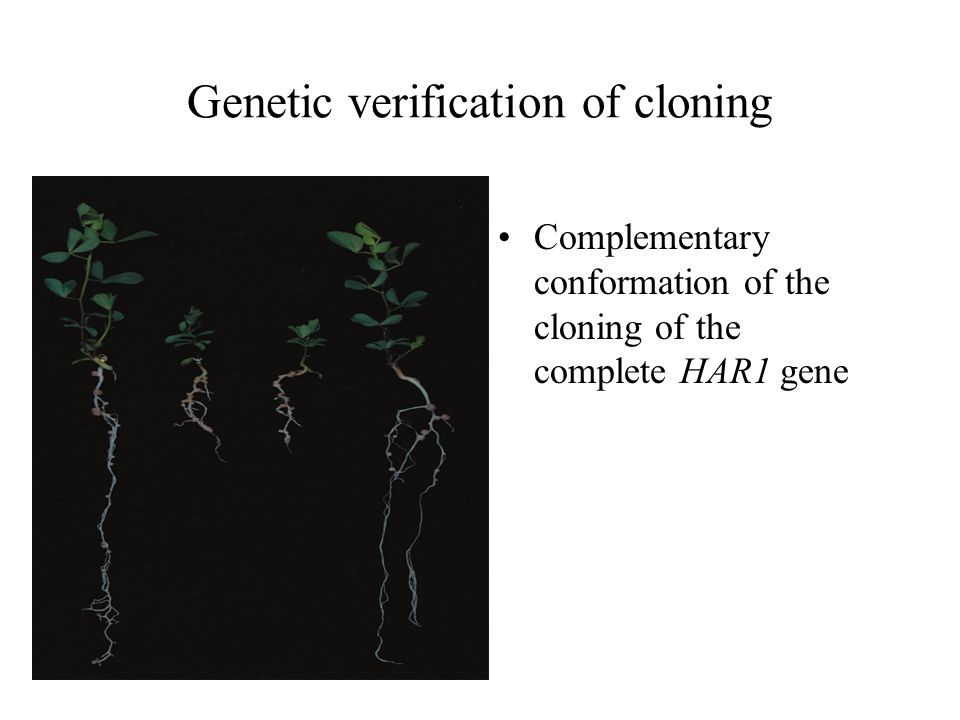 Genetic verification of cloning Complementary conformation of the cloning of the complete HAR1 gene