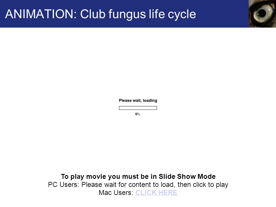 ANIMATION: Club fungus life cycle To play movie you must be in Slide Show Mode PC Users: Please wait for content to load, then click to play Mac Users