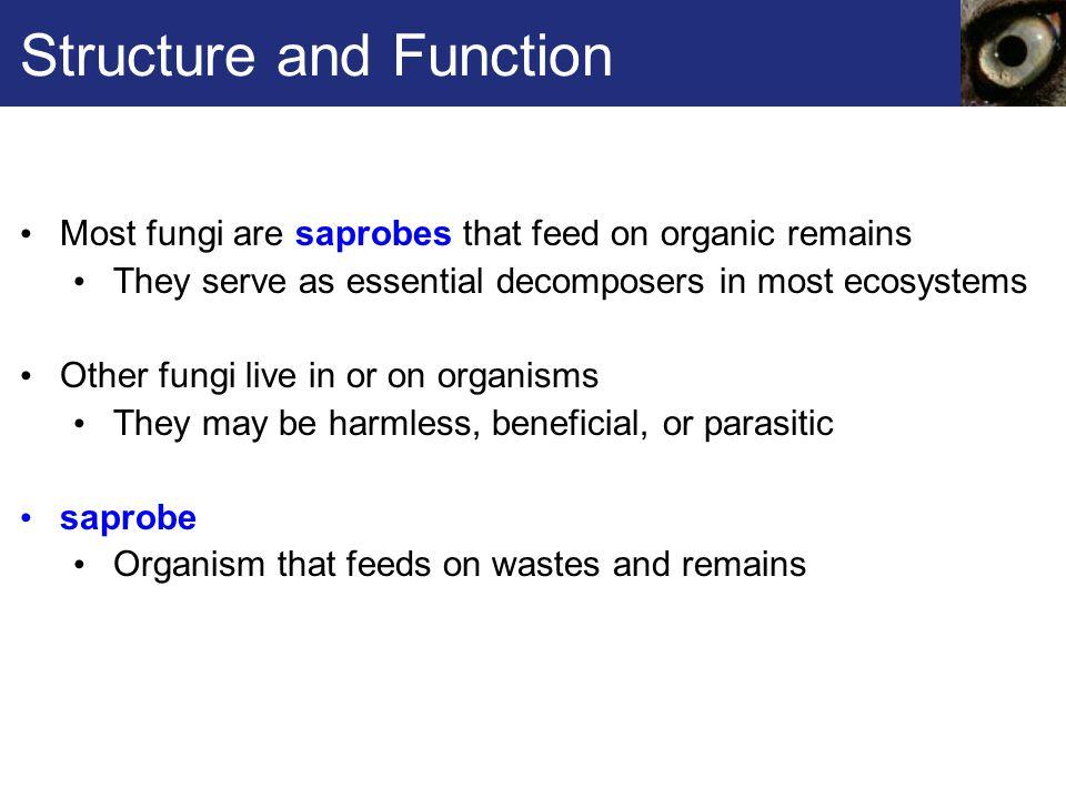 Fig. 22.7a, p. 347 Puffball Club Fungus Fruiting Bodies
