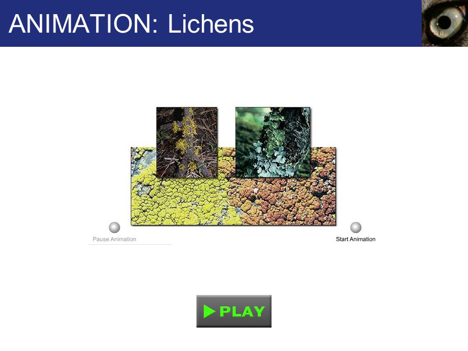 ANIMATION: Lichens
