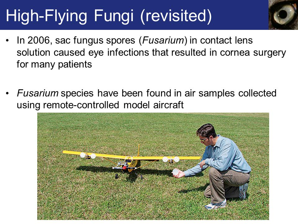 High-Flying Fungi (revisited) In 2006, sac fungus spores (Fusarium) in contact lens solution caused eye infections that resulted in cornea surgery for